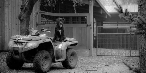 Dog on ATV