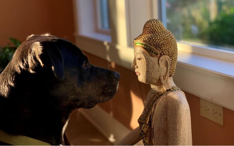 My Dog Pistol and Buddha