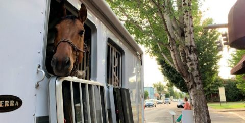 horse on main street